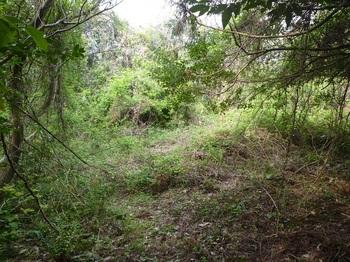 P1240083イバラヤブの林道.JPG