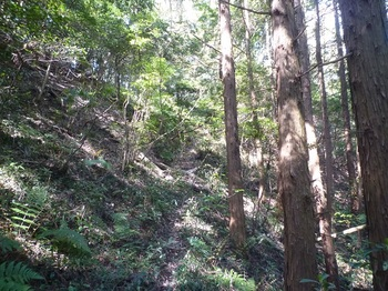 P1240256植林沿い.JPG
