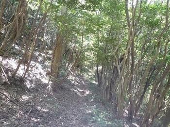 P1240321巻き道(左方向).JPG