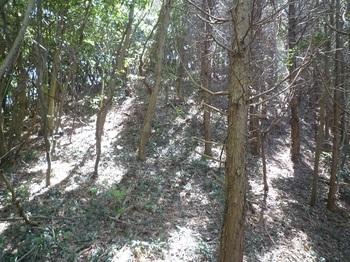 P1240348右ヒノキ林境.JPG