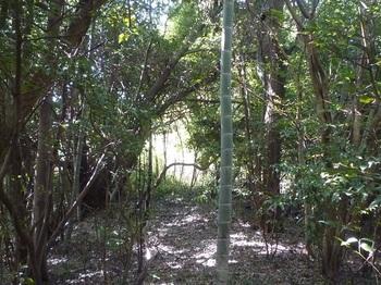P1240420雑木林に変わる.JPG