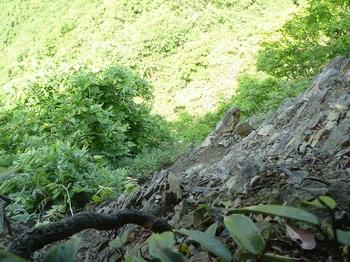 P1240738山頂から崖地方向を覗く.JPG
