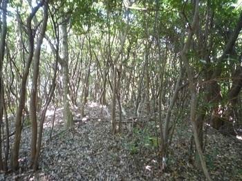 P1240852雑木疎林尾根の小ピーク.JPG