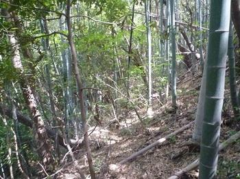 P1240855竹林境を巻く.JPG