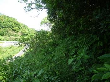 P1240860草被りの巻き道.JPG