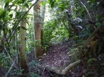 P1240905植林沿いの巻き道.JPG
