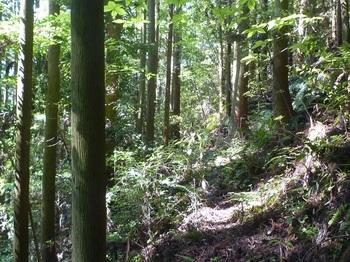 P1240908植林沿い.JPG