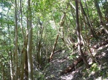 P1240909雑木林沿い.JPG