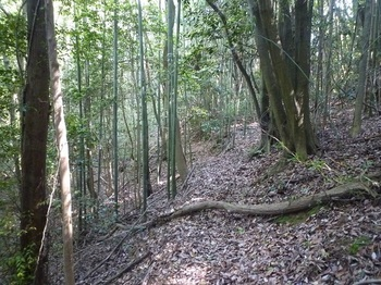 P1240914竹林沿い.JPG