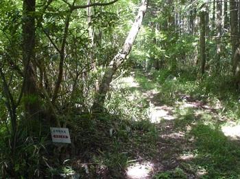 P1240943歴史の道と分かれ林道へ.JPG