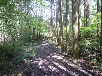 P1240944植林沿い.JPG