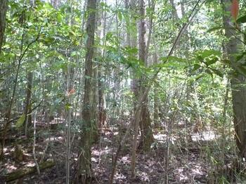 P1240953植林・灌木帯.JPG
