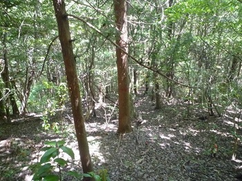 P1250016植林が現われる.JPG