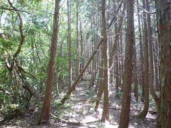 P1250026植林境尾根.JPG