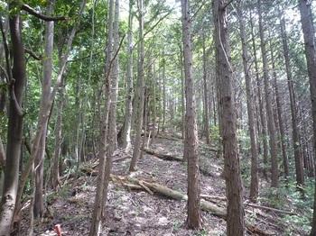 P1250029植林境.JPG
