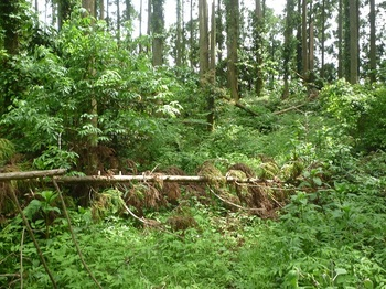 P1250045草被りの林道.JPG