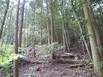 P1250051植林境の上り.JPG