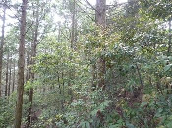 P1250059左植林帯.JPG