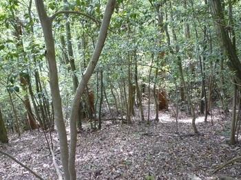 P1250067雑木疎林斜面.JPG
