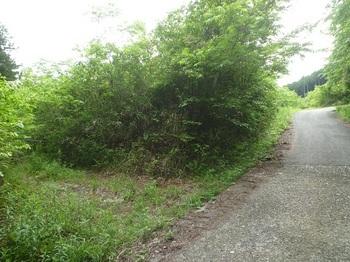 P1250077林道平原線分岐.JPG