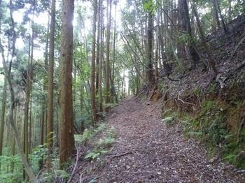 P1250088幅広の山道.JPG
