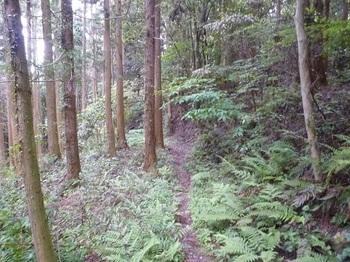 P1250099植林沿い.JPG