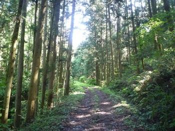 P1250108植林沿い.JPG