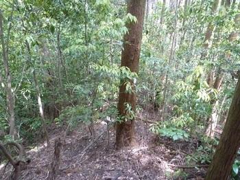 P1250165植林境尾根.JPG