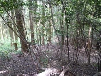 P1250175植林境.JPG