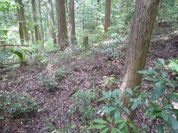P1250177植林境の下り.JPG