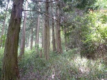 P1250183植林境・ササ.JPG