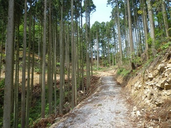 P1250230林道.JPG
