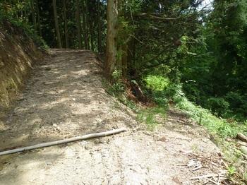 P1250237林道分岐・右自然歩道.JPG