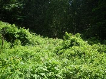 P1250240草が密生する自然歩道.JPG
