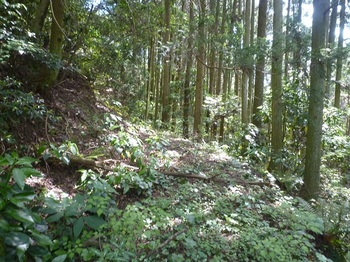 P1250242植林沿い.JPG