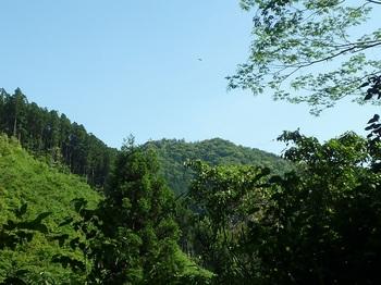 P1250269林道から朝か垰山.JPG