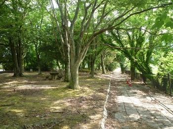P1250289公園.JPG
