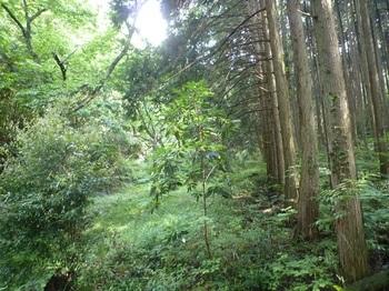 P1250302谷沿いの踏み跡.JPG