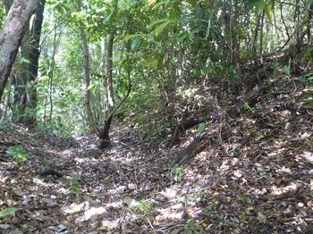 P1250329掘割り状(右方向から).JPG