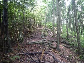 P1250469植林境.JPG