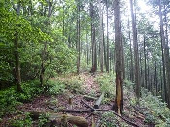P1250472植林境.JPG