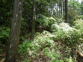 P1250473植林境・灌木.JPG
