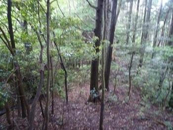 P1250477植林境.JPG