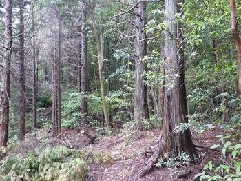 P1250489植林境・580m.JPG