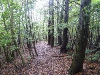 P1250494植林境の平坦尾根.JPG
