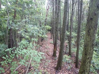 P1250497植林境.JPG