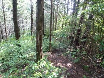 P1250526植林境・490m.JPG