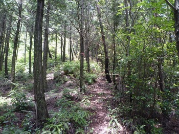 P1250562植林境.JPG