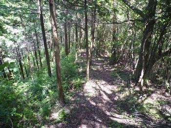 P1250580植林境の巡視路.JPG