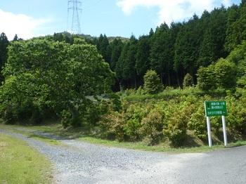 P1250588大滝コース登山口.JPG